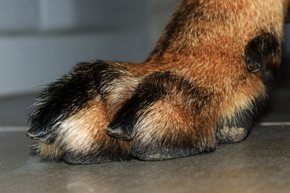 A word on your dogs nails dog training tips solutioingenieria Gallery